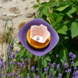 Fleur violette pour massif