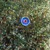 Fleur bleue pour massif