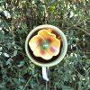 Fleur pour massif jaune