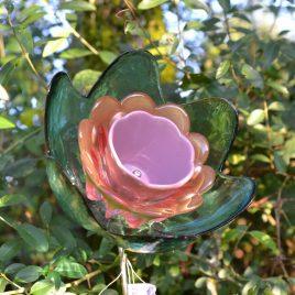 Fleur saladier, décoration de jardin, massif