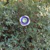 Fleur verte et violette pour massif