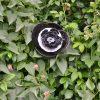 Rose noire en vaisselle, déco de jardin